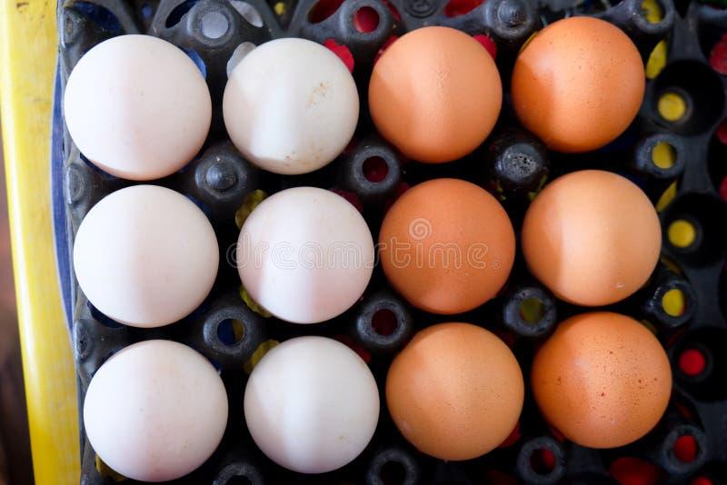Αυγά παπιών και αυγό κοτόπουλου στο μαύρο δίσκο στοκ εικόνες