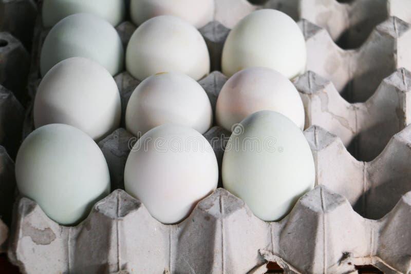 Αυγά παπιών στο δίσκο εγγράφου στην αγορά στοκ φωτογραφία