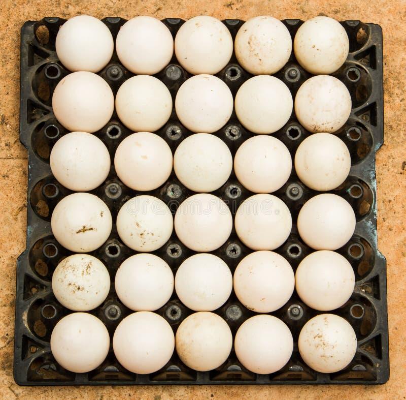Αυγά παπιών στοκ φωτογραφία με δικαίωμα ελεύθερης χρήσης