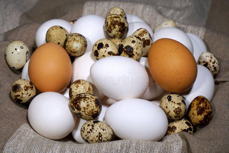 Αυγά πουλιών Διαφορετικά είδη αυγών πουλιών στοκ φωτογραφίες