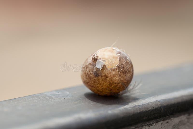 Αυγά πουλιών που κλέβονται από κάτι Ήρθε στην πύλη, φυσικό backg στοκ εικόνες