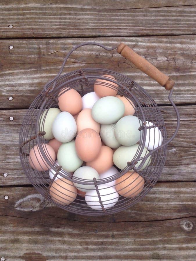 Αυγά σε ένα καλάθι στοκ φωτογραφία