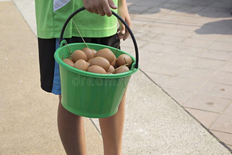Αυγά στον πλαστικό κάδο στοκ εικόνες με δικαίωμα ελεύθερης χρήσης