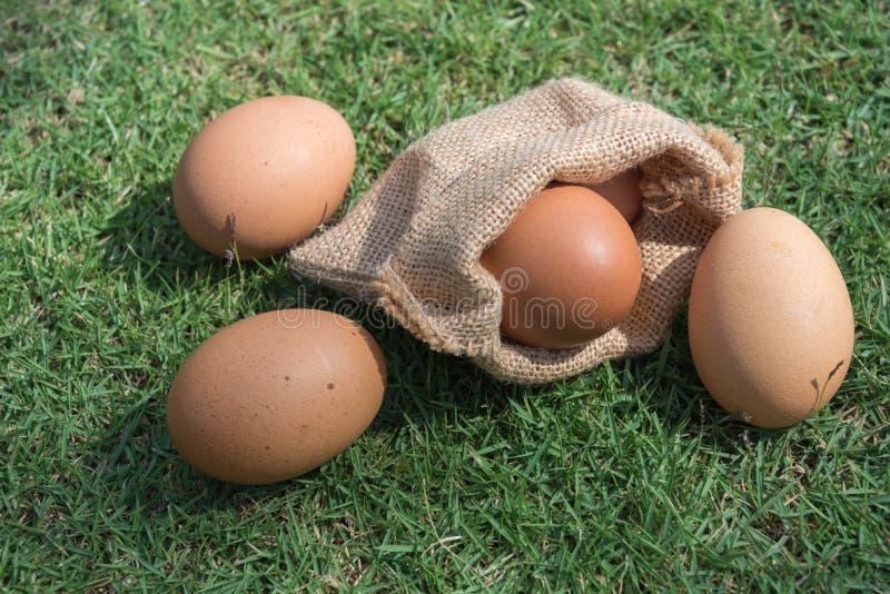 Αυγά στους μικρούς burlap σάκους στοκ φωτογραφίες