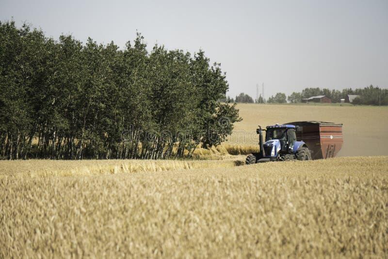 22 Αυγούστου 2017 - Κάλγκαρι, Αλμπέρτα, Καναδάς - καλλιεργήστε τα τρακτέρ και τον εξοπλισμό συγκομίζοντας τη συγκομιδή στοκ φωτογραφία με δικαίωμα ελεύθερης χρήσης