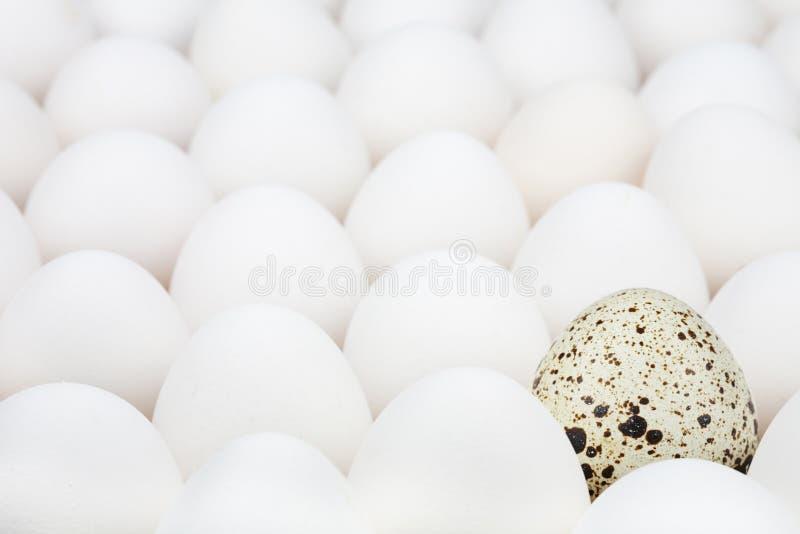 αυγό ασυνήθιστο στοκ εικόνα