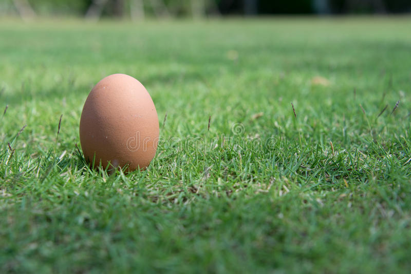 Αυγό στην πράσινη χλόη στοκ εικόνα με δικαίωμα ελεύθερης χρήσης