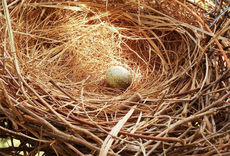 Αυγό στη λάμποντας χρυσή φωλιά στοκ εικόνες
