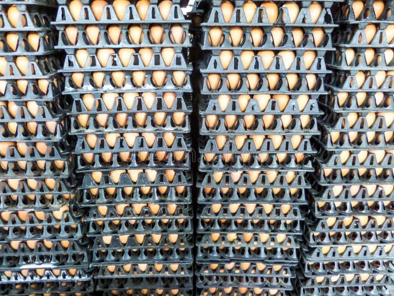 Αυγό στο πακέτο στοκ εικόνες