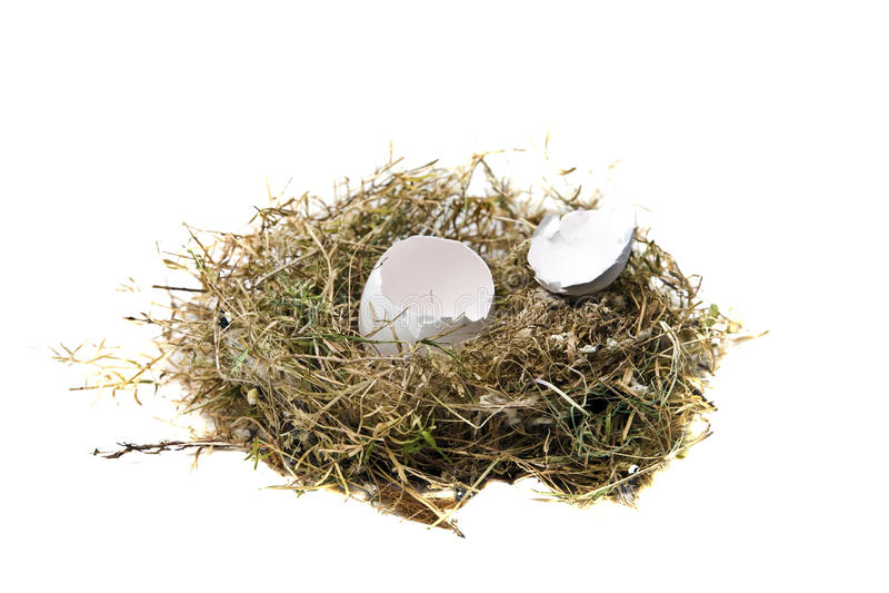 Αυγό φωλιών στοκ εικόνα με δικαίωμα ελεύθερης χρήσης