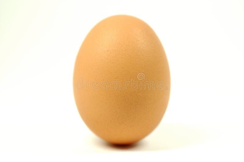Download αυγό στοκ εικόνες. εικόνα από πρωτεΐνη, γένεση, όρεξης - 1536970