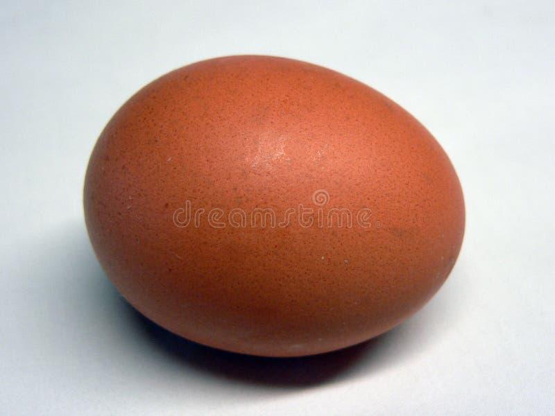 Αυγό στοκ εικόνα