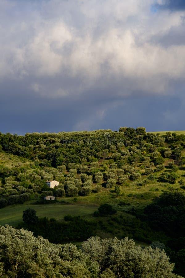 Αυλάκι ελιών στα βουνά στοκ εικόνες