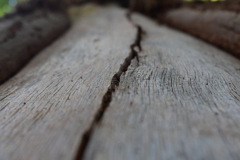 Αυλάκι σε ένα δέντρο στοκ φωτογραφία με δικαίωμα ελεύθερης χρήσης