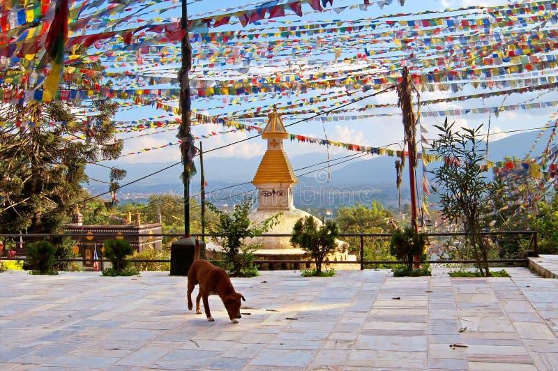 Αυλή (ναός πιθήκων) του stupa Swayambhunath στοκ φωτογραφία με δικαίωμα ελεύθερης χρήσης