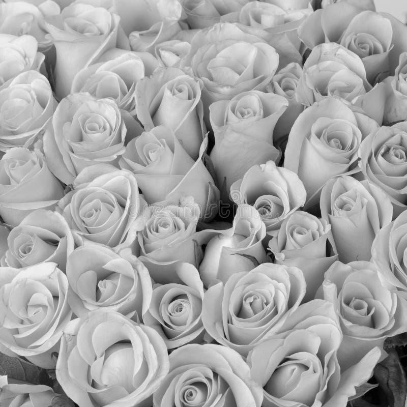 Αυξήθηκε ανθοδέσμη λουλουδιών, γραπτό χρώμα στοκ εικόνα με δικαίωμα ελεύθερης χρήσης