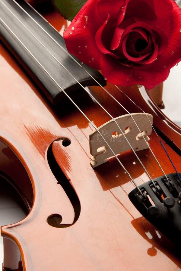 αυξήθηκε βιολί στοκ φωτογραφίες