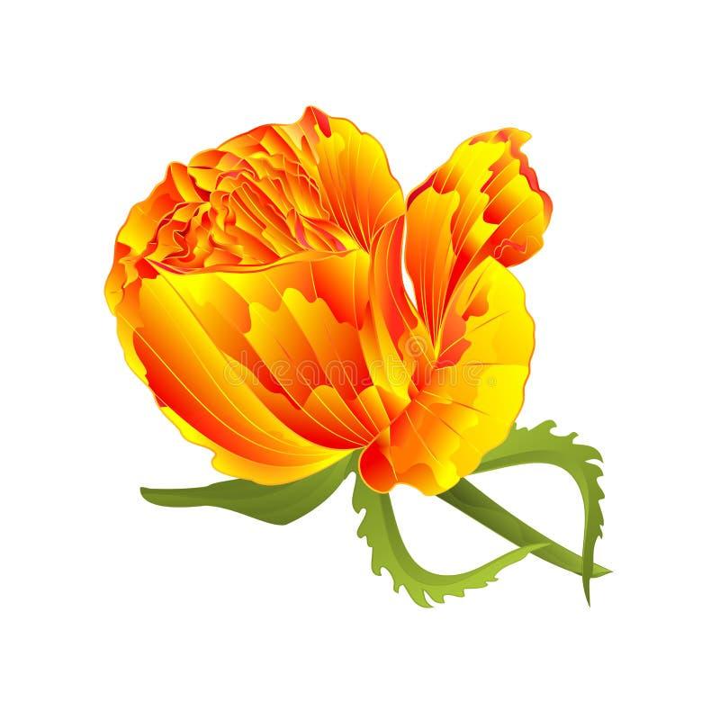 Αυξήθηκε κίτρινος και φύλλα σε ένα άσπρο υπόβαθρο που το εκλεκτής ποιότητας διανυσματικό editable χέρι απεικόνισης σύρει ελεύθερη απεικόνιση δικαιώματος