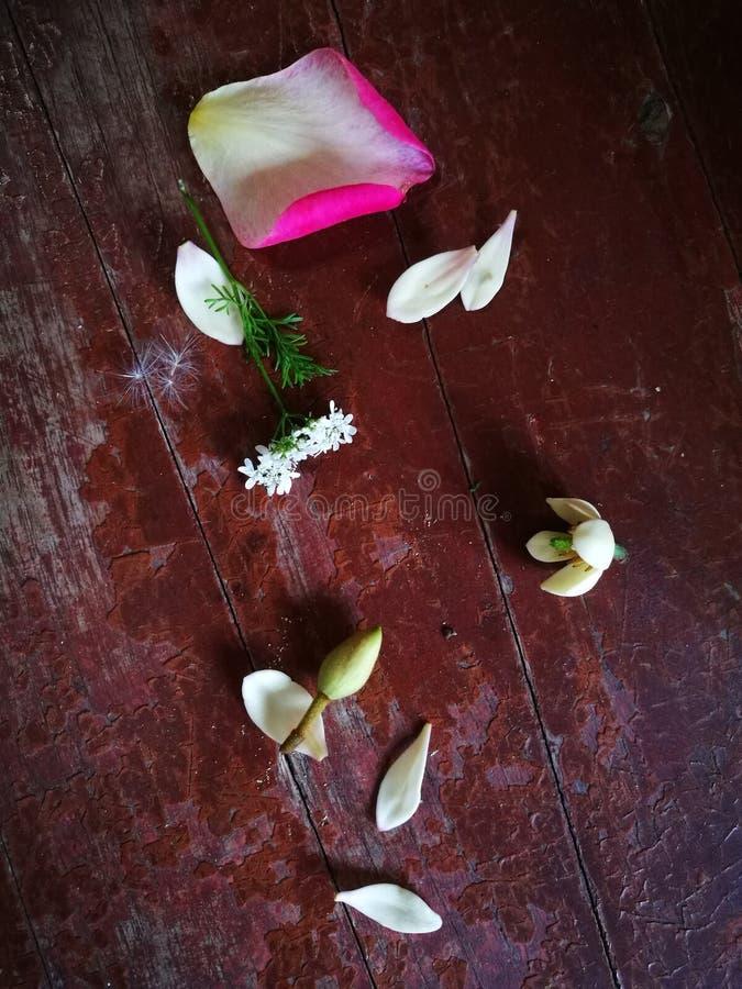 Αυξήθηκε και πεντάλι magnolia στον ξύλινο πίνακα στοκ εικόνα με δικαίωμα ελεύθερης χρήσης