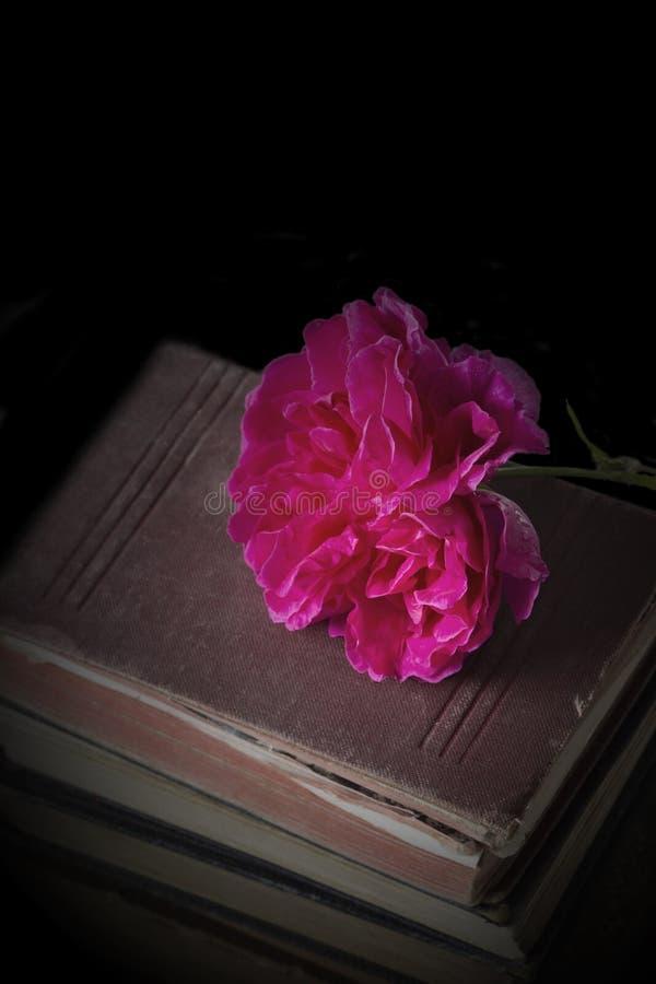 Αυξήθηκε λουλούδι πάνω από έναν σωρό των παλαιών παλαιών βιβλίων στοκ εικόνες με δικαίωμα ελεύθερης χρήσης