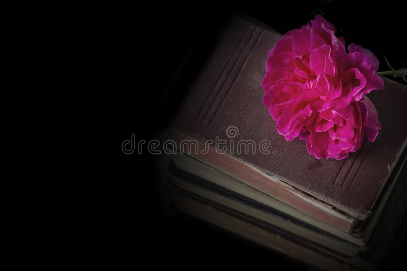 Αυξήθηκε λουλούδι πάνω από έναν σωρό των παλαιών παλαιών βιβλίων στοκ φωτογραφίες με δικαίωμα ελεύθερης χρήσης