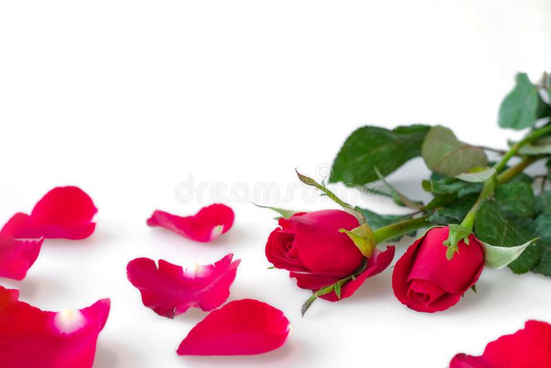 Αυξήθηκε λουλούδι που αντιπροσωπεύει την αγάπη στο δώρο ημέρας του βαλεντίνου ημέρας με τον εορτασμό στις διακοπές σε ένα άσπρο υ στοκ εικόνες με δικαίωμα ελεύθερης χρήσης