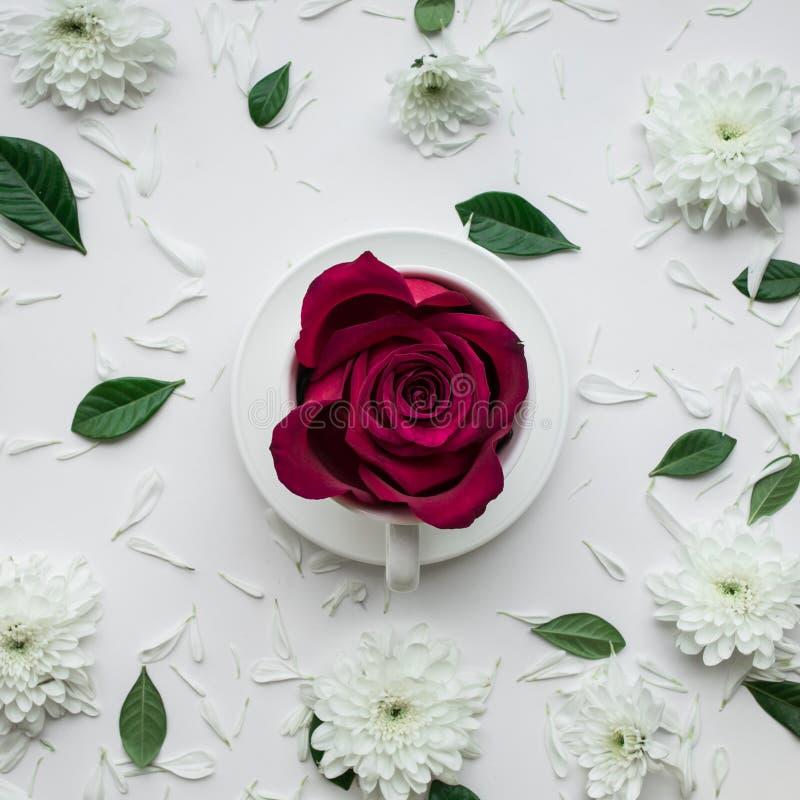 Αυξήθηκε λουλούδι στο φλυτζάνι coffe στο άσπρο υπόβαθρο Επίπεδος βάλτε βαλεντίνος στοκ φωτογραφία με δικαίωμα ελεύθερης χρήσης