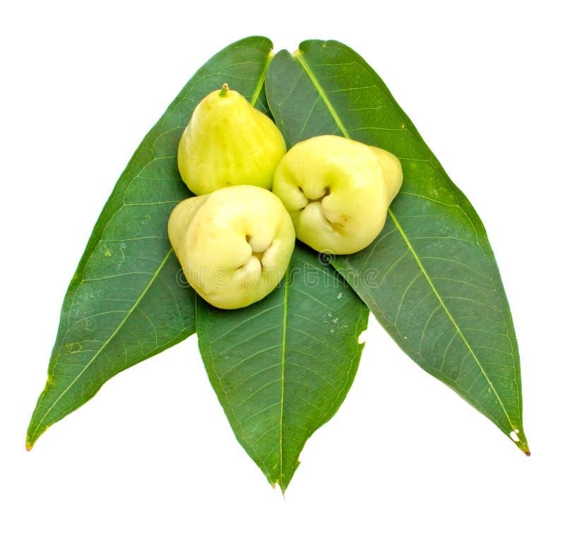 Αυξήθηκε μήλα ή πράσινο chomphu στοκ φωτογραφίες με δικαίωμα ελεύθερης χρήσης