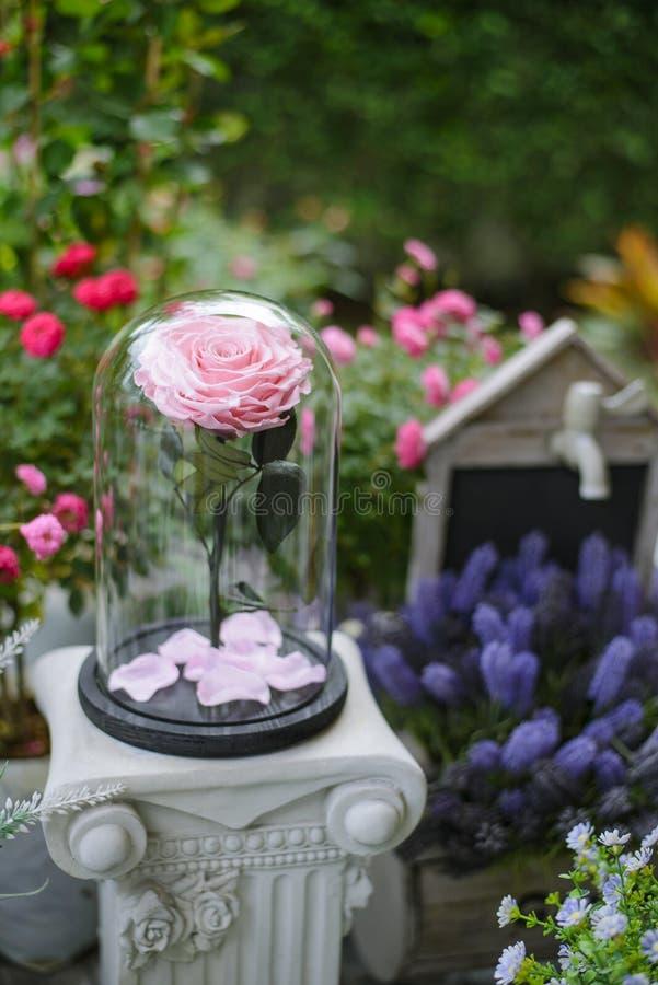 Αυξήθηκε λουλούδια στο θόλο γυαλιού στην πίσω αυλή στοκ φωτογραφίες με δικαίωμα ελεύθερης χρήσης