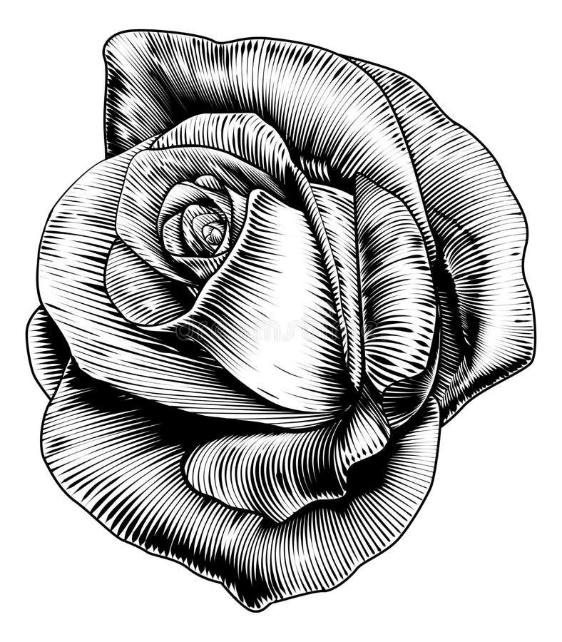 Αυξήθηκε λουλούδι στο χαραγμένο ύφος ξυλογραφιών χάραξης απεικόνιση αποθεμάτων