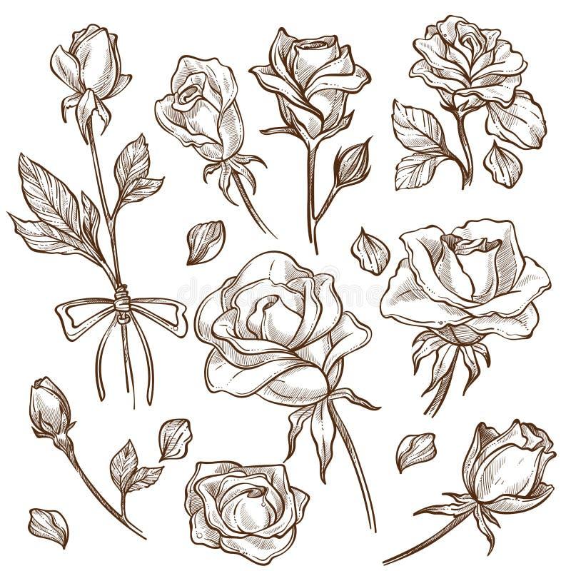 Αυξήθηκε οφθαλμός λουλουδιών και τα petas μίσχων απομόνωσαν τα σκίτσα διανυσματική απεικόνιση