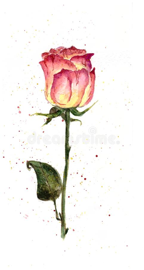 Αυξήθηκε Παφλασμοί σε ένα άσπρο υπόβαθρο watercolor διανυσματική απεικόνιση