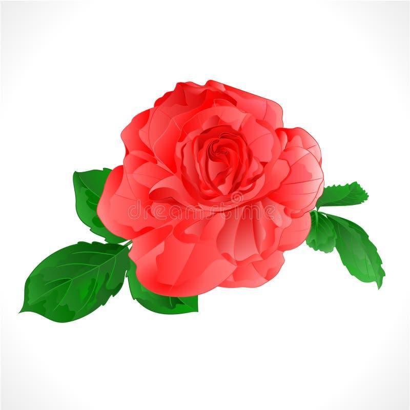 Αυξήθηκε ροζ και φύλλα σε μια άσπρη εκλεκτής ποιότητας διανυσματική βοτανική απεικόνιση υποβάθρου που το editable χέρι σύρει διανυσματική απεικόνιση