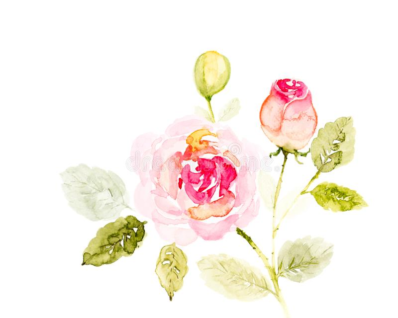 Αυξήθηκε ρόδινο χέρι watercolor λουλουδιών ανθοδεσμών που χρωματίστηκε σε ένα άσπρο υπόβαθρο διανυσματική απεικόνιση