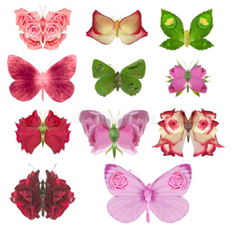 Αυξήθηκε συλλογή πεταλούδων στοκ εικόνες