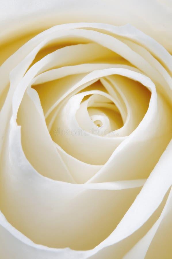 Αυξήθηκε τεμάχιο λουλουδιών στοκ φωτογραφία με δικαίωμα ελεύθερης χρήσης