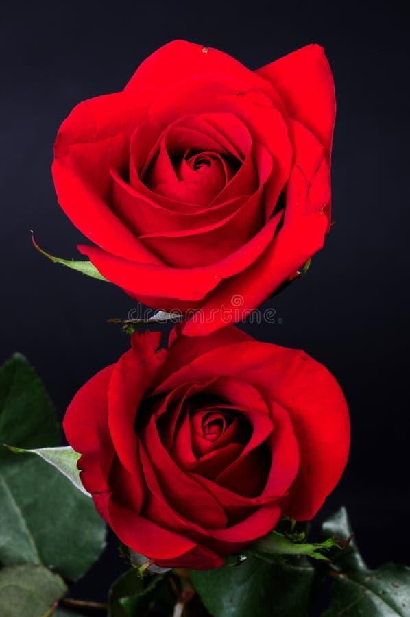 Αυξήθηκε Floral ρύθμιση στοκ φωτογραφία με δικαίωμα ελεύθερης χρήσης