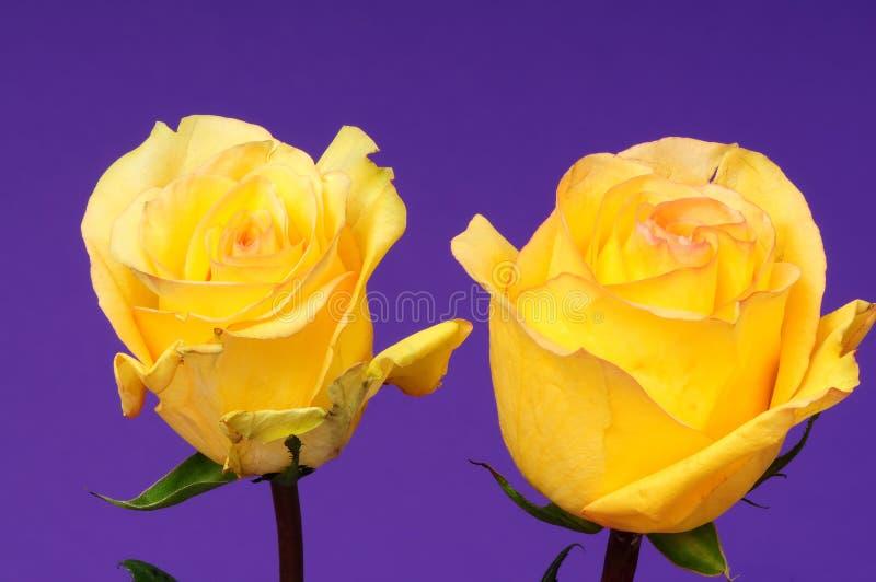 Αυξήθηκε Floral ρύθμιση στοκ φωτογραφίες