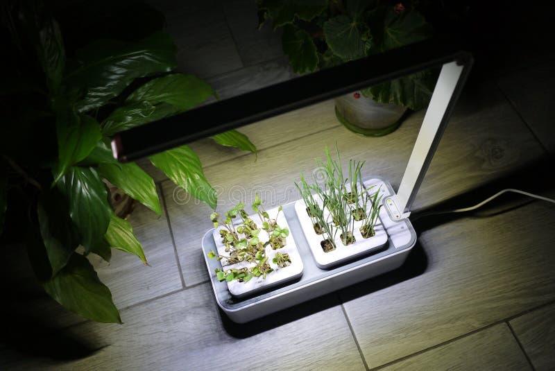 Αυξανόμενος τις εγκαταστάσεις στο σπίτι Ειδικά δοχεία για να αυξηθεί τα χορτάρια, εγκαταστάσεις, λουλούδια στο σπίτι Λεπτομέρειες στοκ φωτογραφία με δικαίωμα ελεύθερης χρήσης