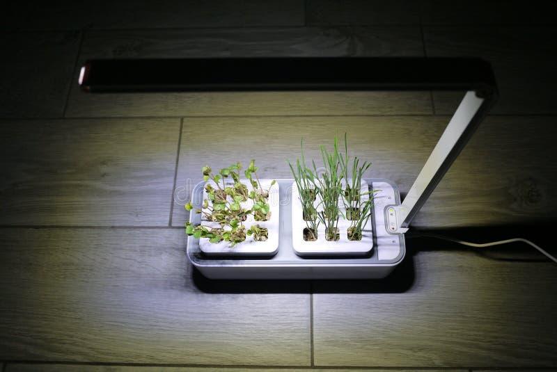Αυξανόμενος τις εγκαταστάσεις στο σπίτι Ειδικά δοχεία για να αυξηθεί τα χορτάρια, εγκαταστάσεις, λουλούδια στο σπίτι Λεπτομέρειες στοκ φωτογραφίες