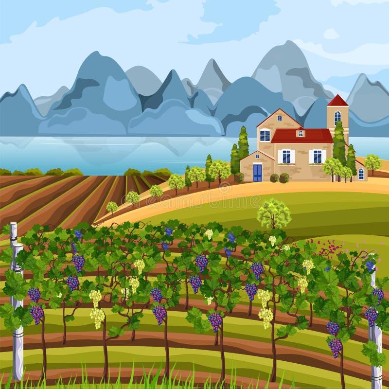 Αυξανόμενο διάνυσμα συγκομιδών αμπελώνων Όμορφοι θερινοί τομείς και απόψεις βουνών διανυσματική απεικόνιση