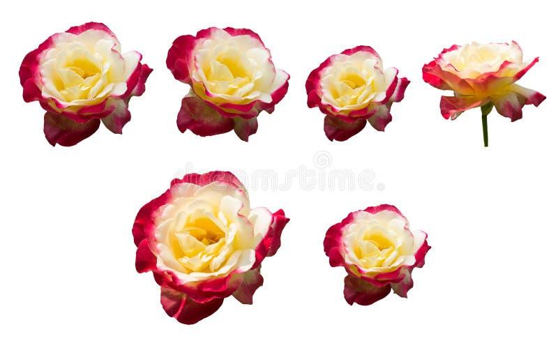 ΑΥΞΗΘΗΚΕ απομονωμένο λουλούδια σύνολο συλλογής στοκ φωτογραφία