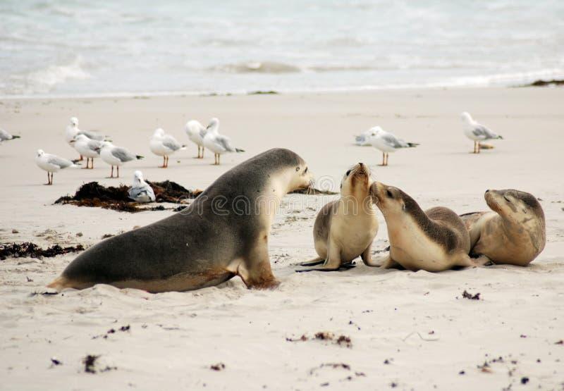αυστραλιανή θάλασσα λι&omi στοκ φωτογραφία