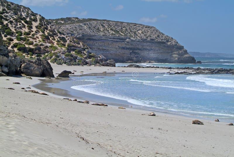 Αυστραλία, SA, νησί καγκουρό, στοκ φωτογραφίες με δικαίωμα ελεύθερης χρήσης