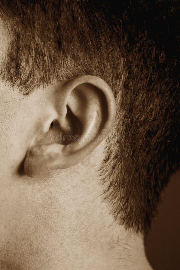 αυτί στοκ φωτογραφίες με δικαίωμα ελεύθερης χρήσης