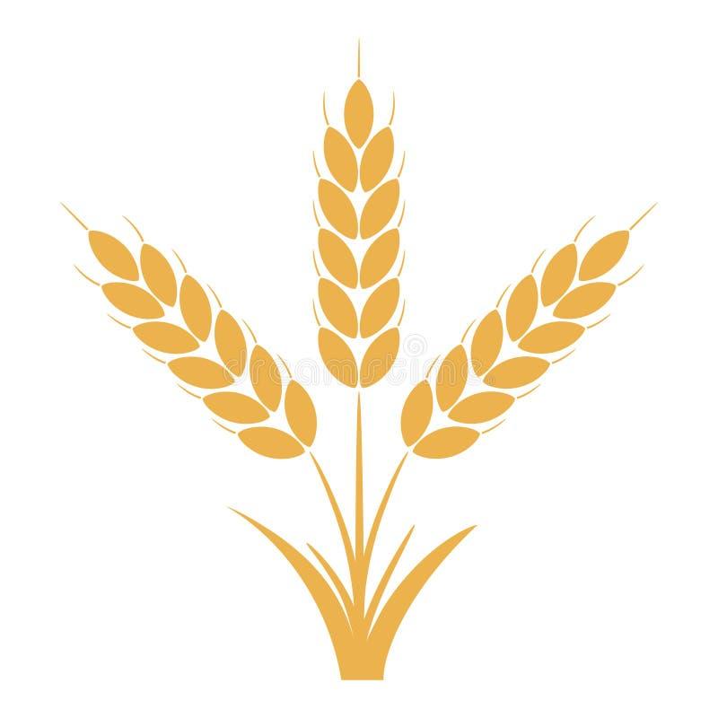 Αυτιά σίτου ή σίκαλης με τα σιτάρια Δέσμη τριών κίτρινων μίσχων κριθαριού διάνυσμα διανυσματική απεικόνιση