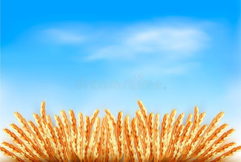 Αυτιά του σίτου μπροστά από το μπλε ουρανό. ελεύθερη απεικόνιση δικαιώματος