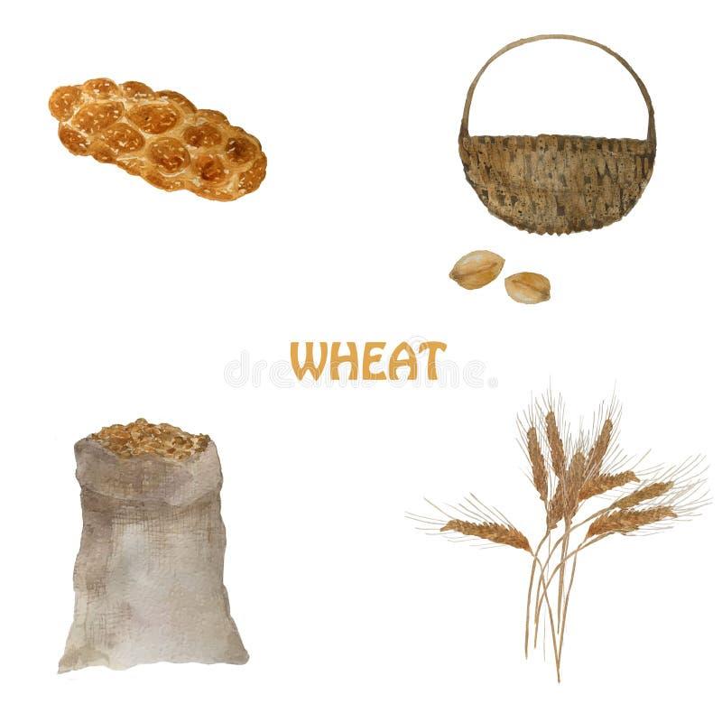 Αυτιά του σίτου Στάδια Watercolor της παραγωγής ψωμιού με τα σιτάρια σίτου, challah, καλάθι του σιταριού ελεύθερη απεικόνιση δικαιώματος