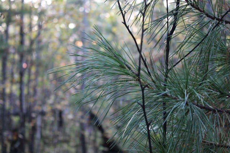 Αυτό είναι η βλάστηση στο Βορρά στοκ εικόνες με δικαίωμα ελεύθερης χρήσης