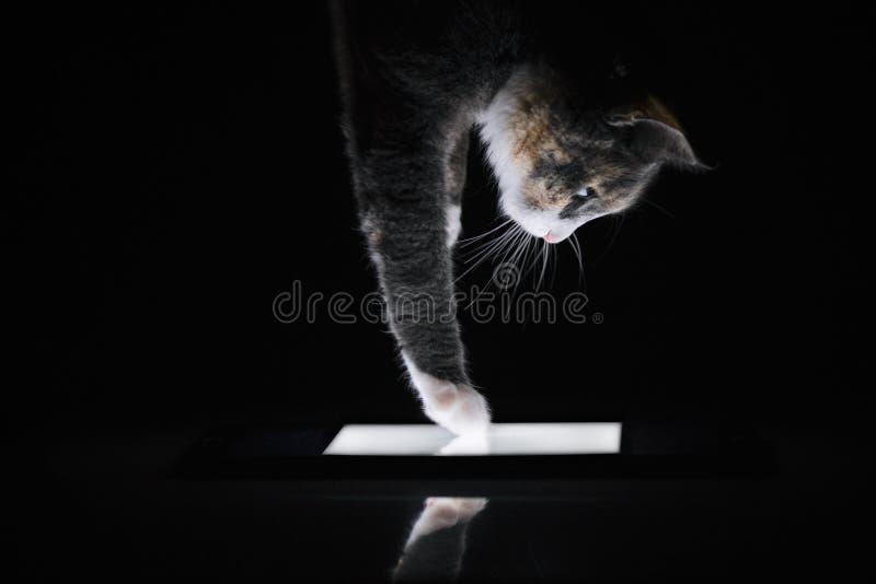 αφές γατών στην οθόνη της ταμπλέτας από το πόδι στοκ εικόνες με δικαίωμα ελεύθερης χρήσης